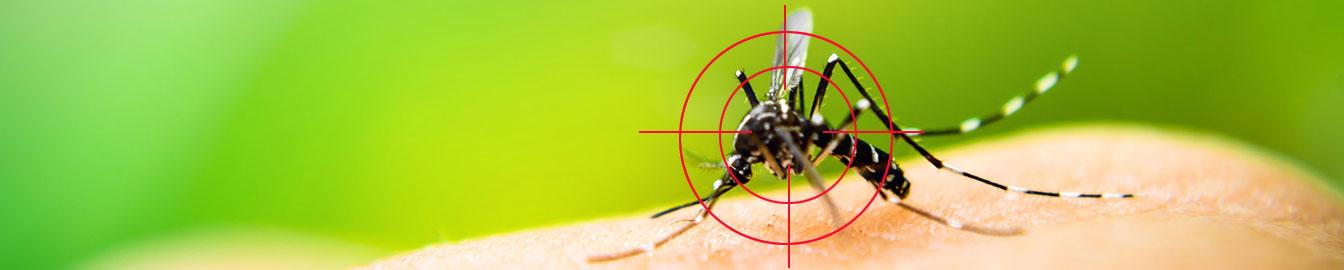 Szúnyoghálók, rágcsálóriasztók és rovarölők
